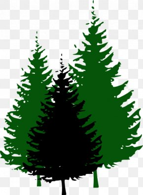 Evergreen Cliparts - Evergreen Pine Tree Clip Art PNG