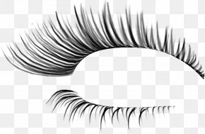 3 D - Eyelash Extensions Cosmetics Clip Art PNG