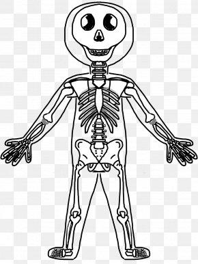 Fun Skeleton Cliparts - Human Skeleton Human Body Anatomy Muscle PNG