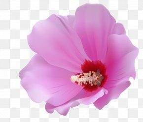 Pink Flower - Flower Petal Clip Art PNG