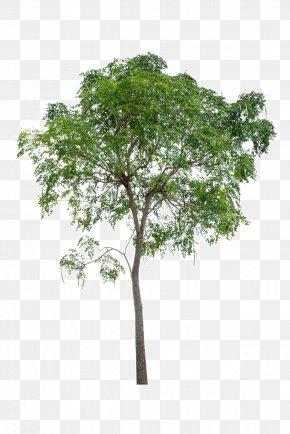 Lush Trees - Tree Icon PNG