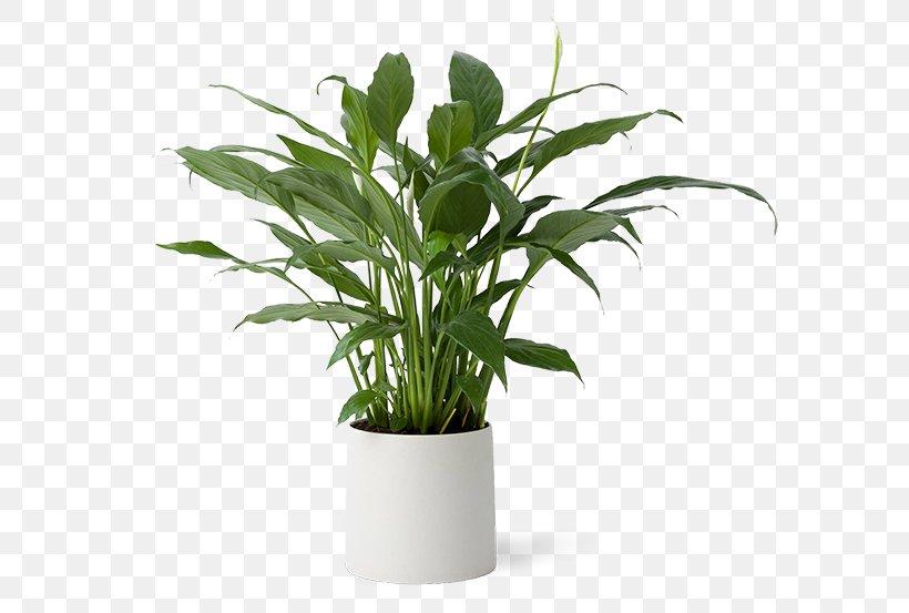 Leaf Flowerpot Houseplant Grasses Plant Stem, PNG, 600x553px, Leaf, Family, Flowerpot, Grass, Grass Family Download Free