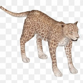 Leopard - Felidae African Leopard Cheetah Lion Indian Leopard PNG