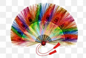 Feather Fan Son - Feather Peafowl PNG