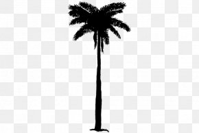 M Date Palm Palm Trees Leaf - Asian Palmyra Palm Black & White PNG