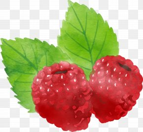 Vector Hand Painted Red Raspberry - Euclidean Vector Download Icon PNG
