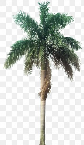 Palm Tree - Roystonea Regia Galaxy Homes (P) Ltd Tree Arecaceae Plant PNG