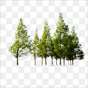 Trees - Tree PNG