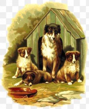 Cute Dog - Beagle Puppy Kitten Pet Dog Breed PNG