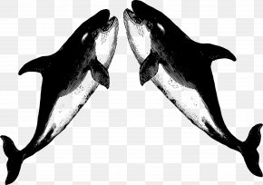 T-shirt - White-beaked Dolphin Killer Whale T-shirt Porpoise Raglan Sleeve PNG