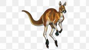 Kangaroo - Red Kangaroo Illustration PNG
