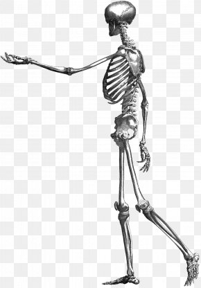 Skeleton - Drawing Photography Book Illustration PNG