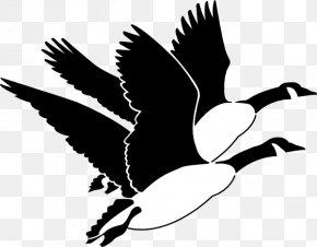 Mother Goose Clipart - Goose Duck Mallard Bird Clip Art PNG