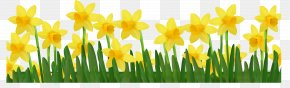 Grass With Daffodils Clipart Picture - Daffodil Clip Art PNG