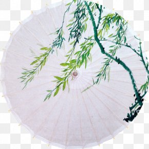 Willow On Paper Umbrella - Oil-paper Umbrella PNG