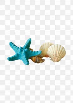 Shells Starfish - Seashell Starfish Sunscreen Gratis PNG