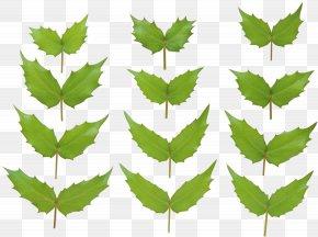 Green Leaf - 2018 Nissan LEAF 2017 Nissan LEAF Plant Stem Food PNG
