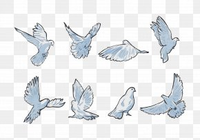 Line Art Drawing - Wing Pigeons And Doves Rock Dove Animal Figure Bird PNG