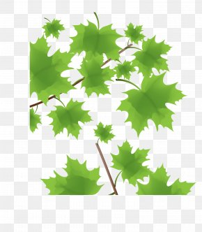 Vector Green Maple Leaf Decoration - Green Maple Leaf PNG