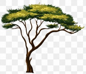 Tree Watercolor - African Trees Clip Art PNG