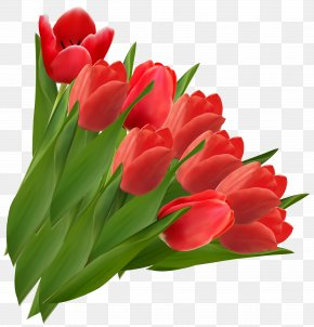 Red Tulips Clipart Picture - Tulip Flower Clip Art PNG