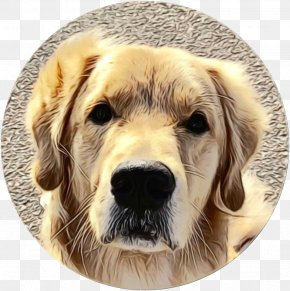 Snout Sporting Group - Dog Golden Retriever Dog Breed Retriever Sporting Group PNG