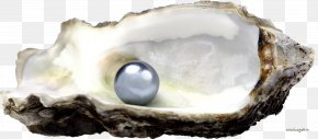 Seashell - Oyster Tahitian Pearl Seashell Stock.xchng PNG
