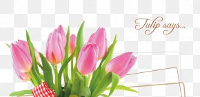 Beautiful Tulips - Tulip Floral Design Mothers Day Happiness PNG