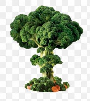 Broccoli Trees - Broccoli Vegetable PNG