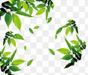 Tea,tea,Leaves,leaf,Floating Leaves - Leaf Download Icon PNG