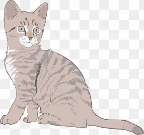 Kitten - Tabby Cat Kitten Drawing Clip Art PNG