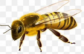 Cricket - Western Honey Bee Insect Royalty-free PNG