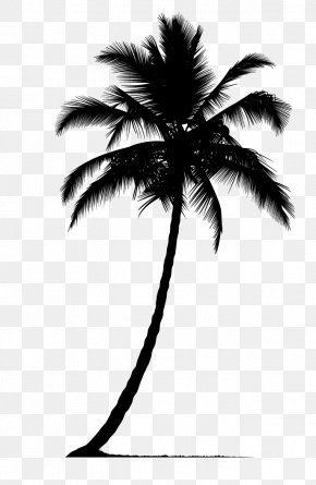 Palm Tree Silhouette - Arecaceae Silhouette Tree PNG