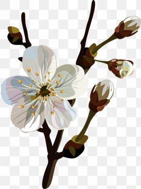 Flower - Blossom Flower Floral Design Clip Art PNG