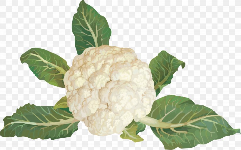 Cabbage Broccoli Cauliflower Brussels Sprout Kohlrabi, PNG, 6460x4033px, Cauliflower, Brassica Oleracea, Broccoli, Cabbage, Cauliflower Cheese Download Free