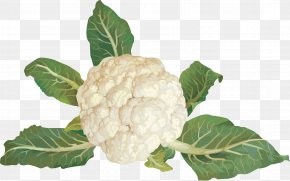 Cauliflower - Cabbage Broccoli Cauliflower Brussels Sprout Kohlrabi PNG