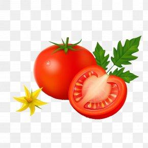 Tomato - Vegetable Tomato Potato Cartoon PNG