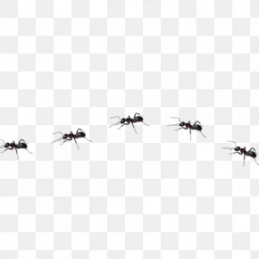 Ant - Ant Insect PNG