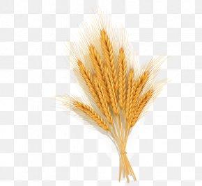 Golden Wheat Vector Material - Wheat Euclidean Vector Icon PNG