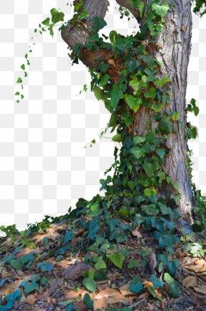Trees - Populus Nigra Tree PNG