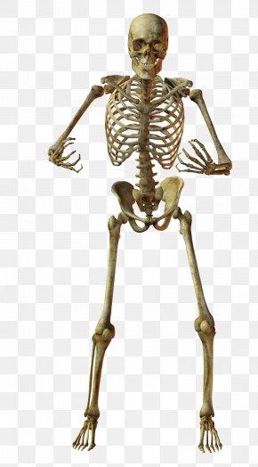 Hugging Skeletons - Skeleton Skull Photography Bone PNG