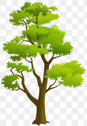 Tree Clip Art - Clip Art PNG