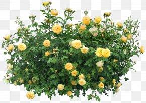Bush Image - Shrub Flower Plant Clip Art PNG