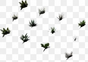 Leaf - Grasses Plant Stem Leaf White Flower PNG