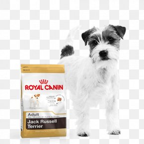 Jack Russell - Jack Russell Terrier Cat Food Puppy Dog Food Royal Canin PNG