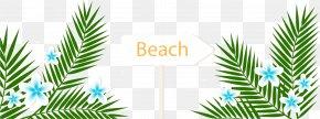 Cartoon Green Leaves - Playa De La Arena Arecaceae Summer Vacation Beach PNG