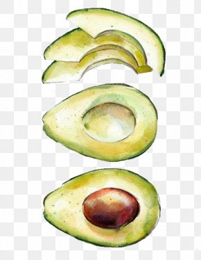 Hand-painted Avocado - Watercolor Painting Printmaking Drawing Avocado PNG