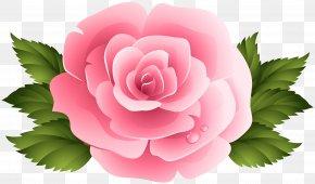 Pink Rose ClipArt Image - Pink Garden Roses Centifolia Roses Clip Art PNG