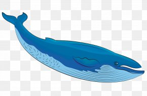 Humpback Whale Fin - Cetacea Whale Blue Whale Dolphin Animal Figure PNG