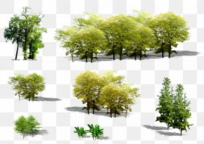 Green Trees - Tree Euclidean Vector Plant PNG
